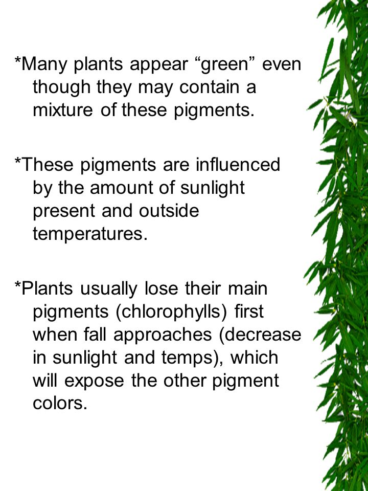 *Many plants appear green even though they may contain a mixture of these pigments.
