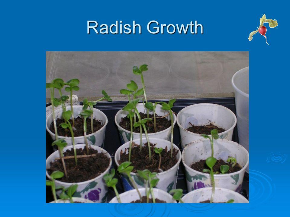 Radish Growth