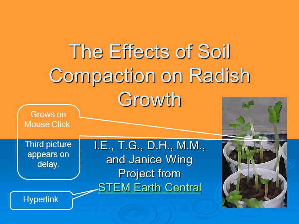 The Effects of Soil Compaction on Radish Growth I.E., T.G., D.H., M.M., and Janice Wing Project from STEM Earth Central STEM Earth Central Grows on Mouse Click.