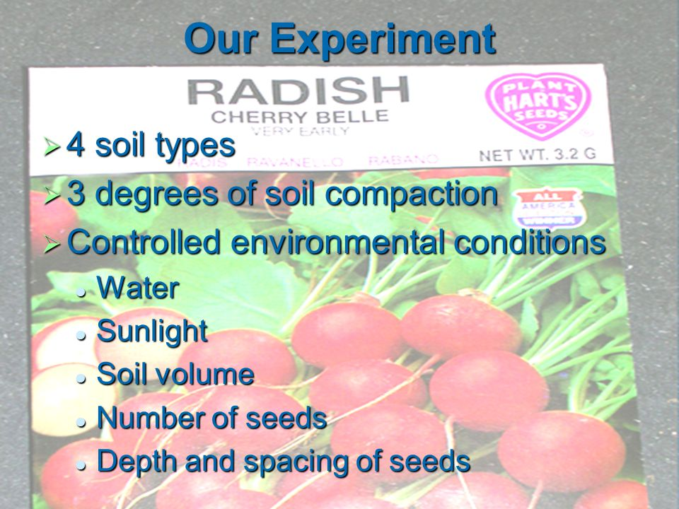Our Experiment  4 soil types  3 degrees of soil compaction  Controlled environmental conditions Water Water Sunlight Sunlight Soil volume Soil volume Number of seeds Number of seeds Depth and spacing of seeds Depth and spacing of seeds