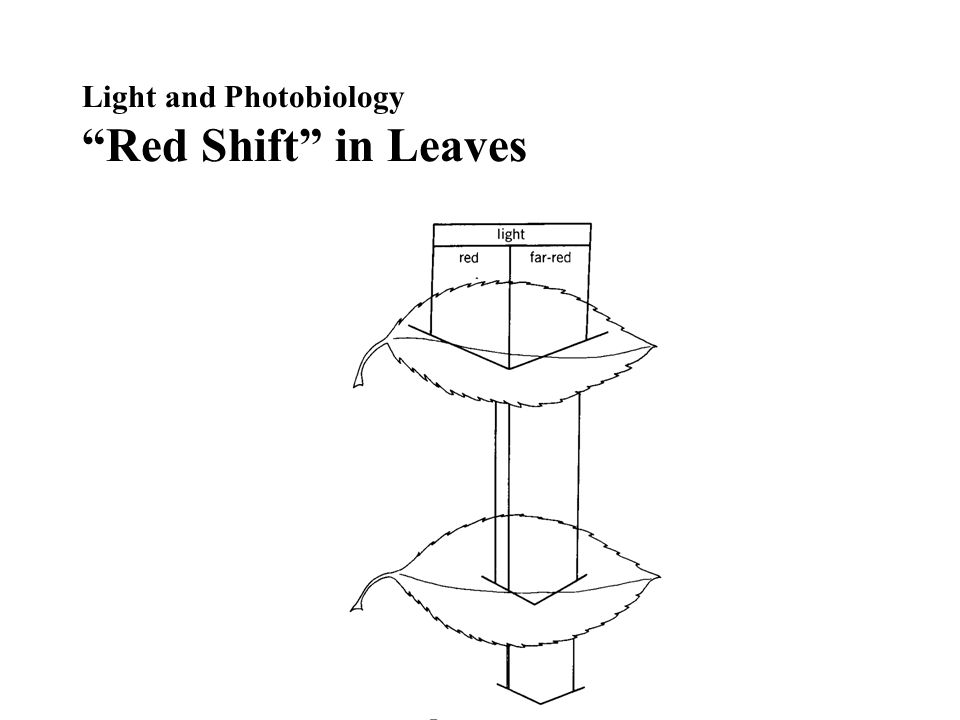 Light and Photobiology Red Shift in Leaves