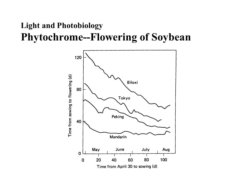 Light and Photobiology Phytochrome--Flowering of Soybean