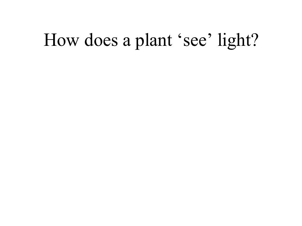 How does a plant 'see' light