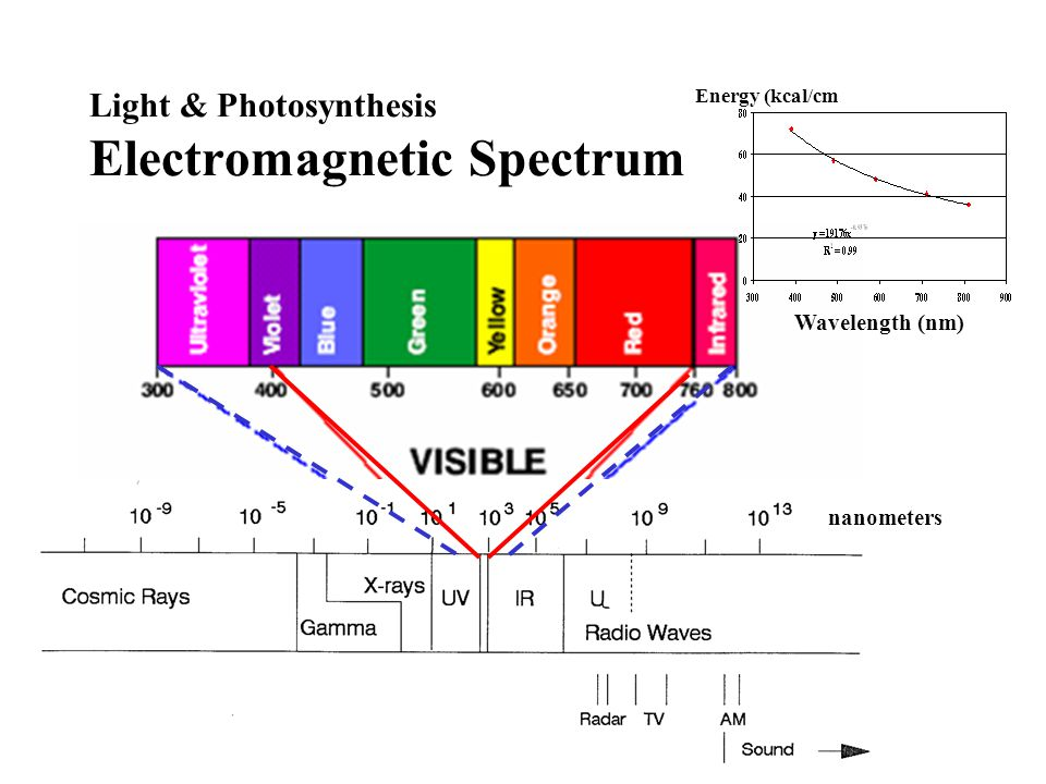 Light and Photobiology Light-Controlled Plant Processes