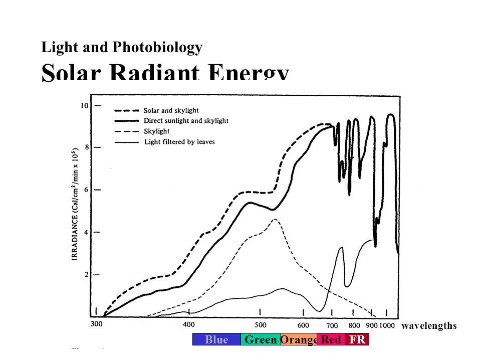 Light and Photobiology Phytochrome Reaction P R P FR Processes: –Shade detectionIntensity –DormancyClock –FloweringClock 660 nm 730 nm Biological action Destruction (w/o light) Dark reversion