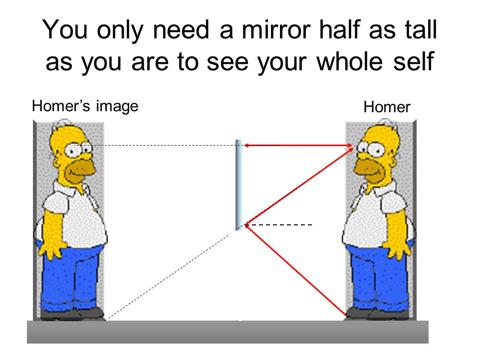 You only need a mirror half as tall as you are to see your whole self Homer's image Homer