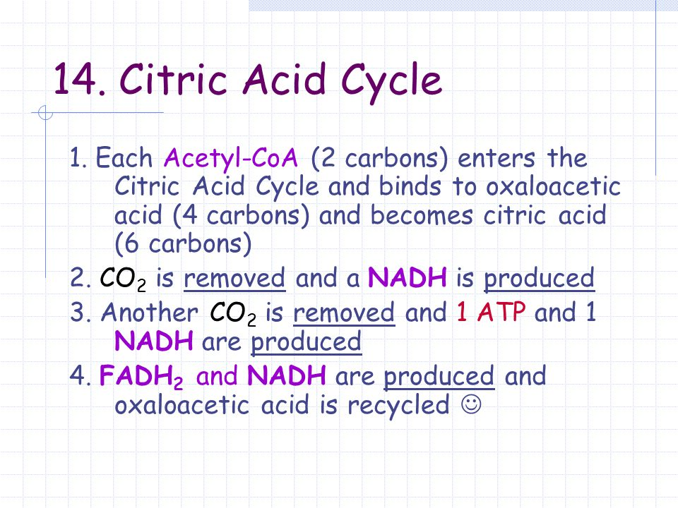14. Citric Acid Cycle 1. Each Acetyl-CoA (2 carbons) enters the Citric Acid Cycle and binds to oxaloacetic acid (4 carbons) and becomes citric acid (6