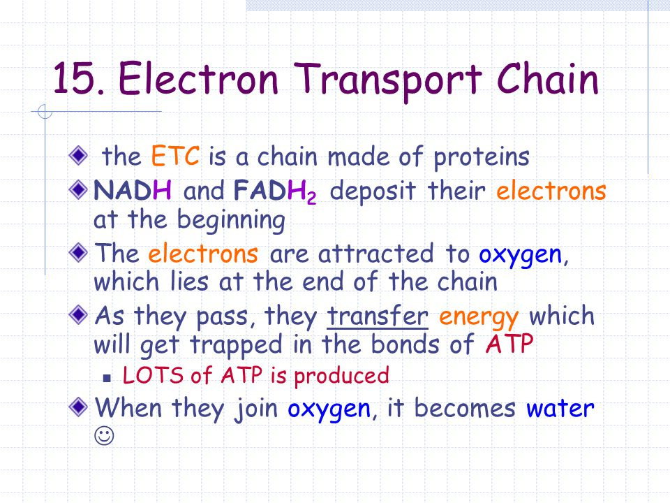 15. Electron Transport Chain the ETC is a chain made of proteins NADH and FADH 2 deposit their electrons at the beginning The electrons are attracted