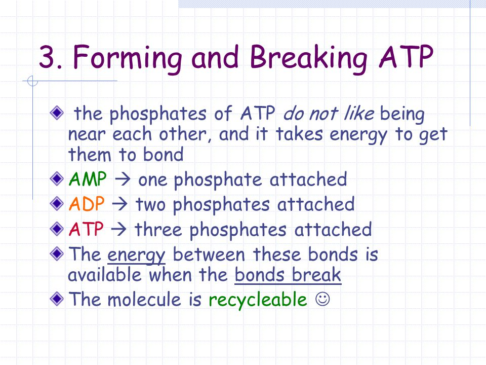 3. Forming and Breaking ATP the phosphates of ATP do not like being near each other, and it takes energy to get them to bond AMP  one phosphate attac