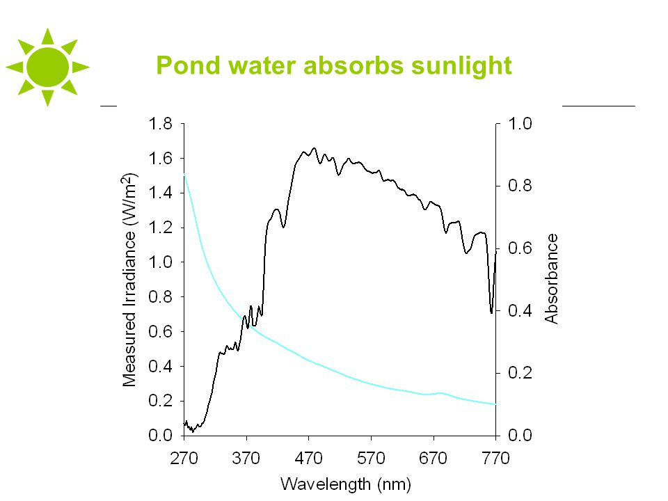 Pond water absorbs sunlight