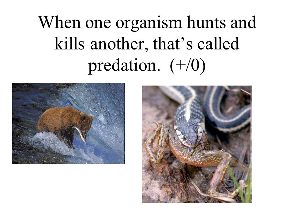 When one organism hunts and kills another, that's called predation. (+/0)