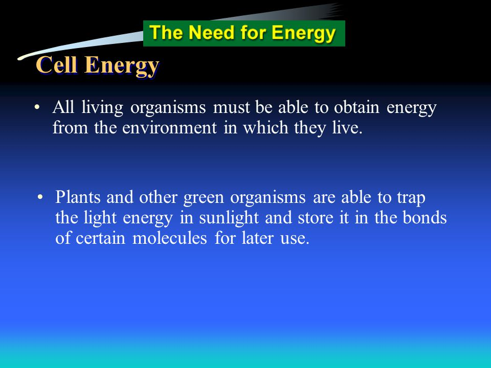 Biology EOI Question 46 Answer D - No other choice has the three stages in order.