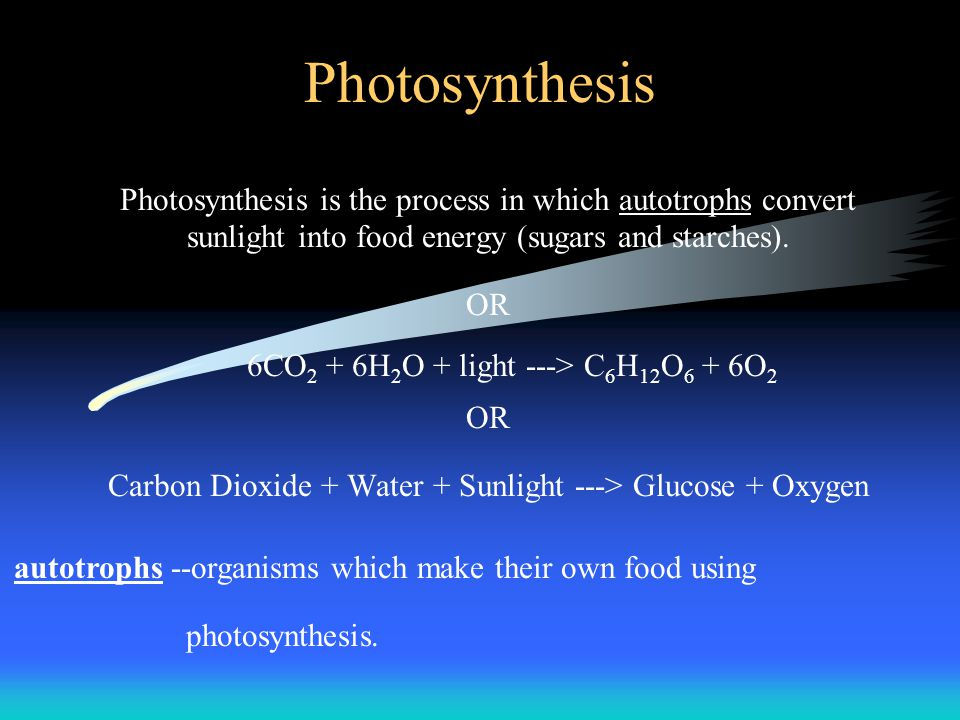 Photosynthesis Photosynthesis is the process in which autotrophs convert sunlight into food energy (sugars and starches). OR 6CO 2 + 6H 2 O + light --