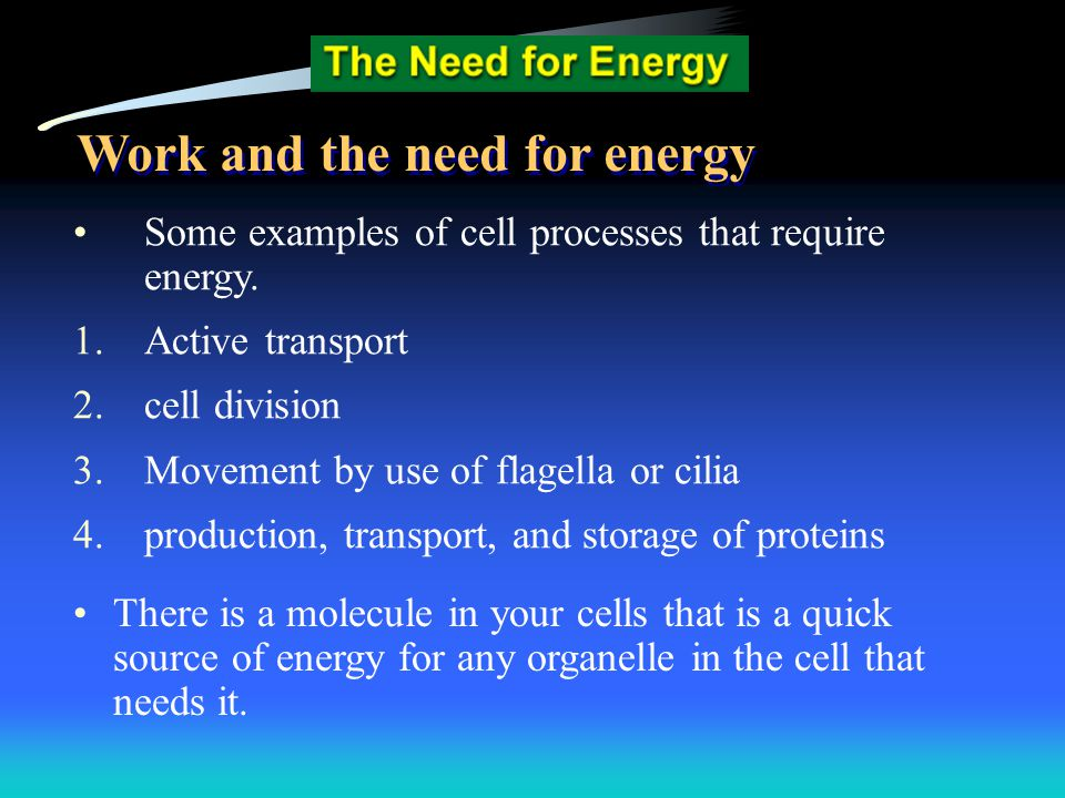 Some examples of cell processes that require energy. 1.Active transport 2.cell division 3.Movement by use of flagella or cilia 4.production, transport