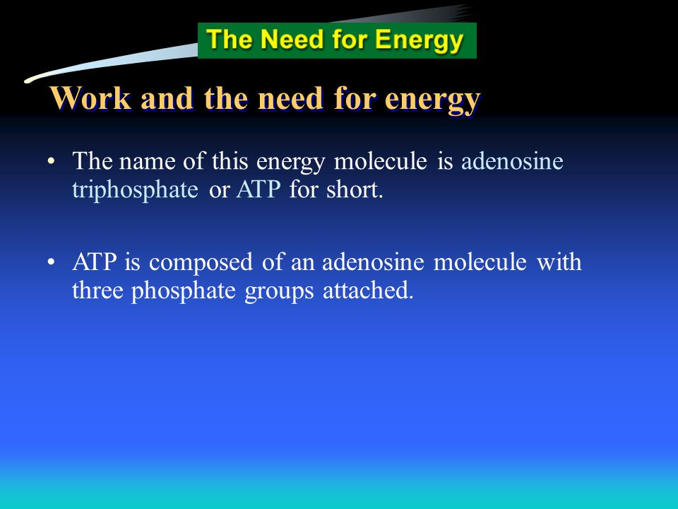 The name of this energy molecule is adenosine triphosphate or ATP for short. ATP is composed of an adenosine molecule with three phosphate groups atta