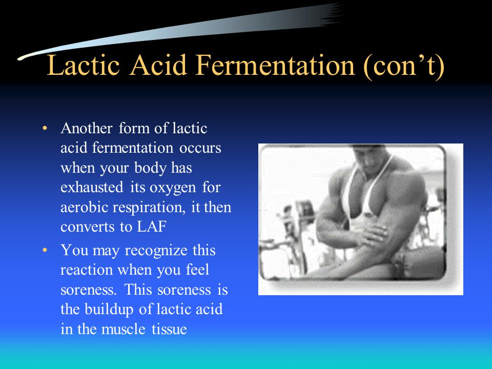 Lactic Acid Fermentation (con't) Another form of lactic acid fermentation occurs when your body has exhausted its oxygen for aerobic respiration, it t