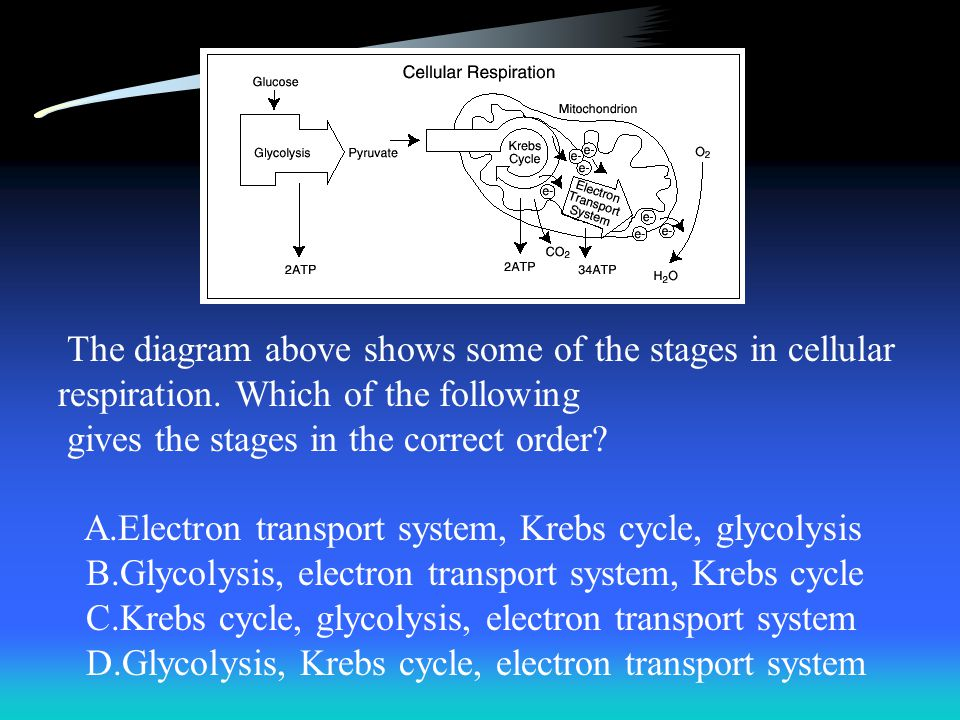 The diagram above shows some of the stages in cellular respiration. Which of the following gives the stages in the correct order? A.Electron transport