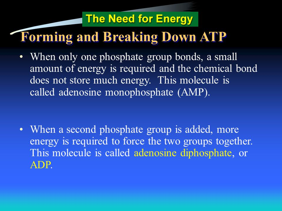 When only one phosphate group bonds, a small amount of energy is required and the chemical bond does not store much energy. This molecule is called ad