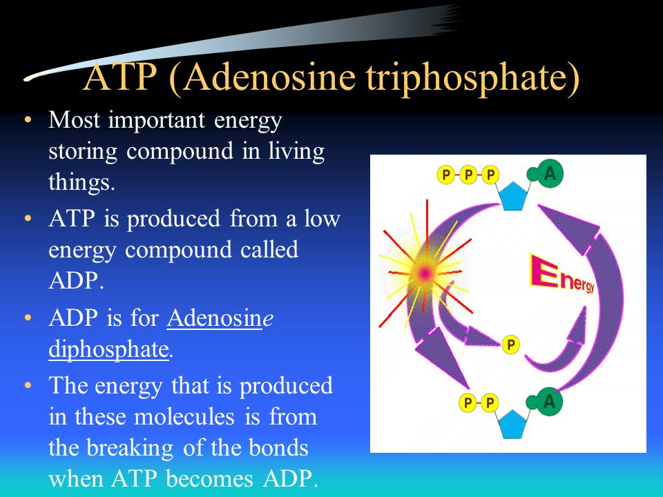 ATP (Adenosine triphosphate) Most important energy storing compound in living things. ATP is produced from a low energy compound called ADP. ADP is fo