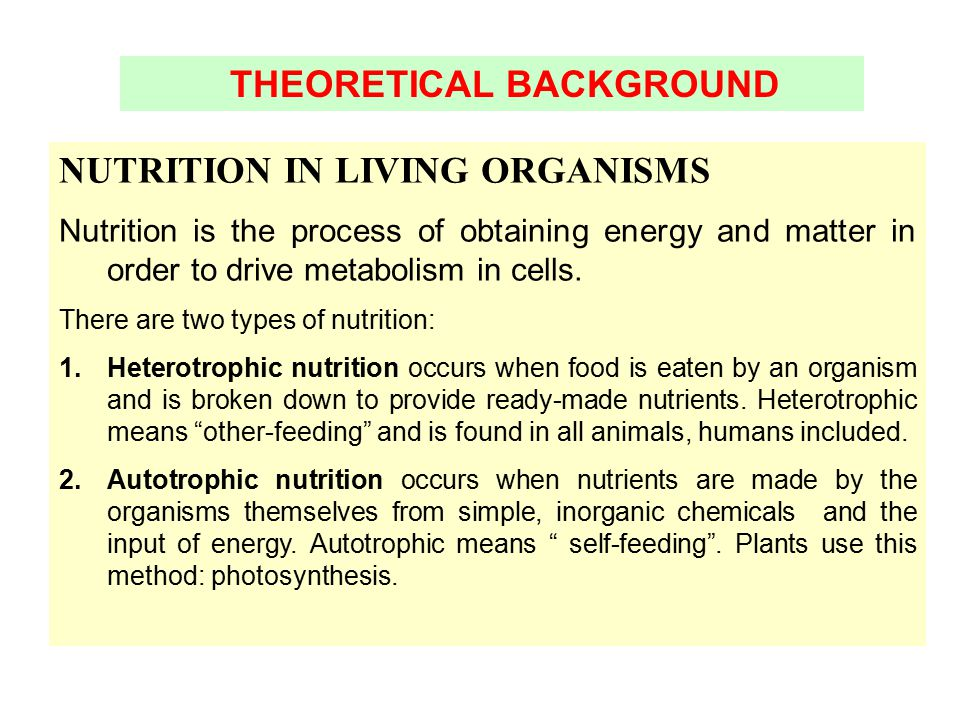 THEORETICAL BACKGROUND NUTRITION IN LIVING ORGANISMS Nutrition is the process of obtaining energy and matter in order to drive metabolism in cells. Th