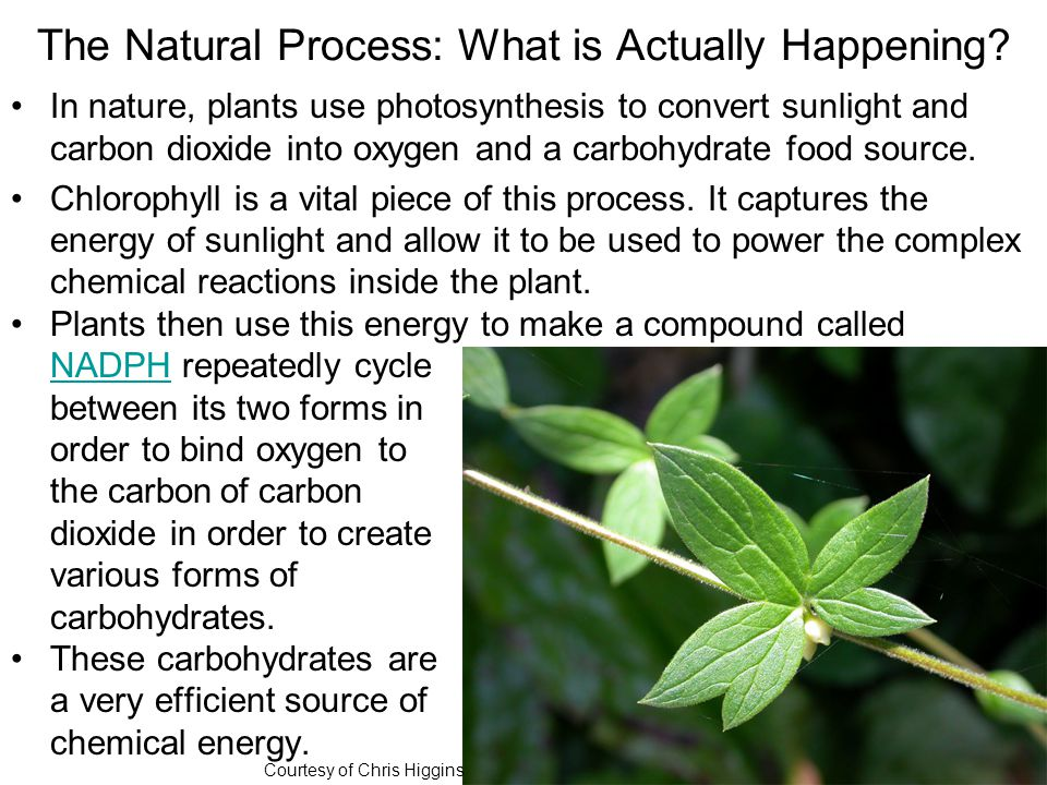 The Natural Process: What is Actually Happening.