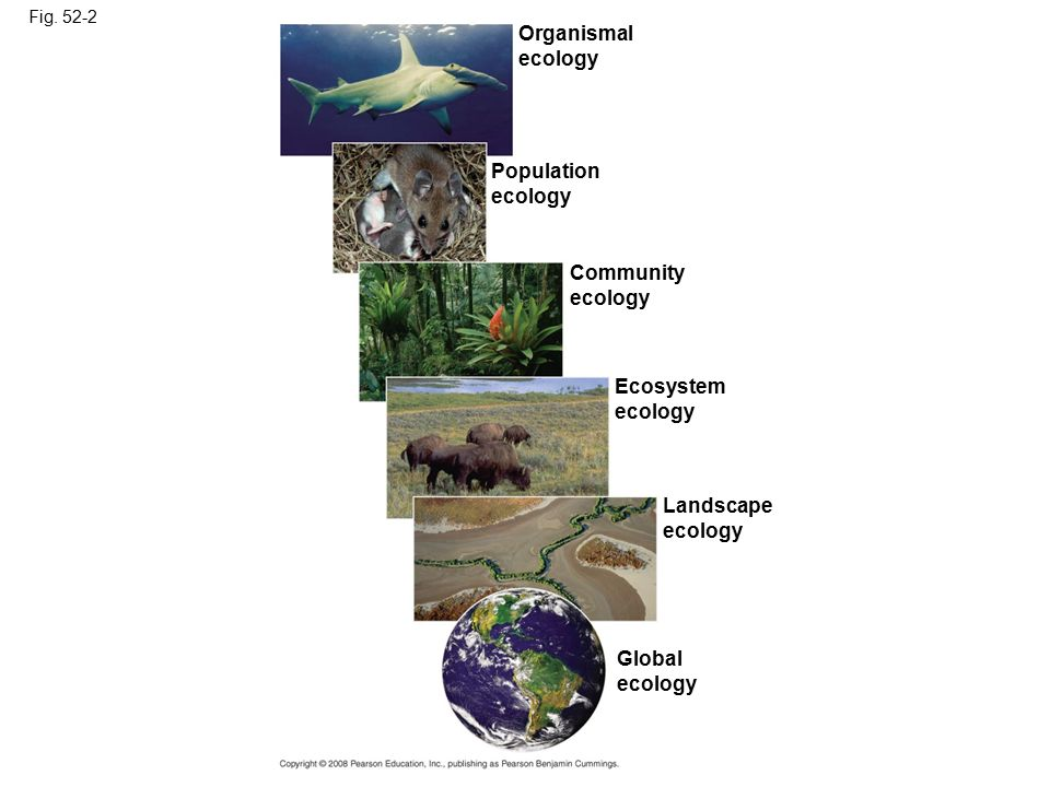 Copyright © 2008 Pearson Education, Inc., publishing as Pearson Benjamin Cummings Concept 52.2: Interactions between organisms and the environment limit the distribution of species Ecologists have long recognized global and regional patterns of distribution of organisms Ecologists recognize two kinds of factors that determine distribution: biotic, or living factors, and abiotic, or nonliving factors