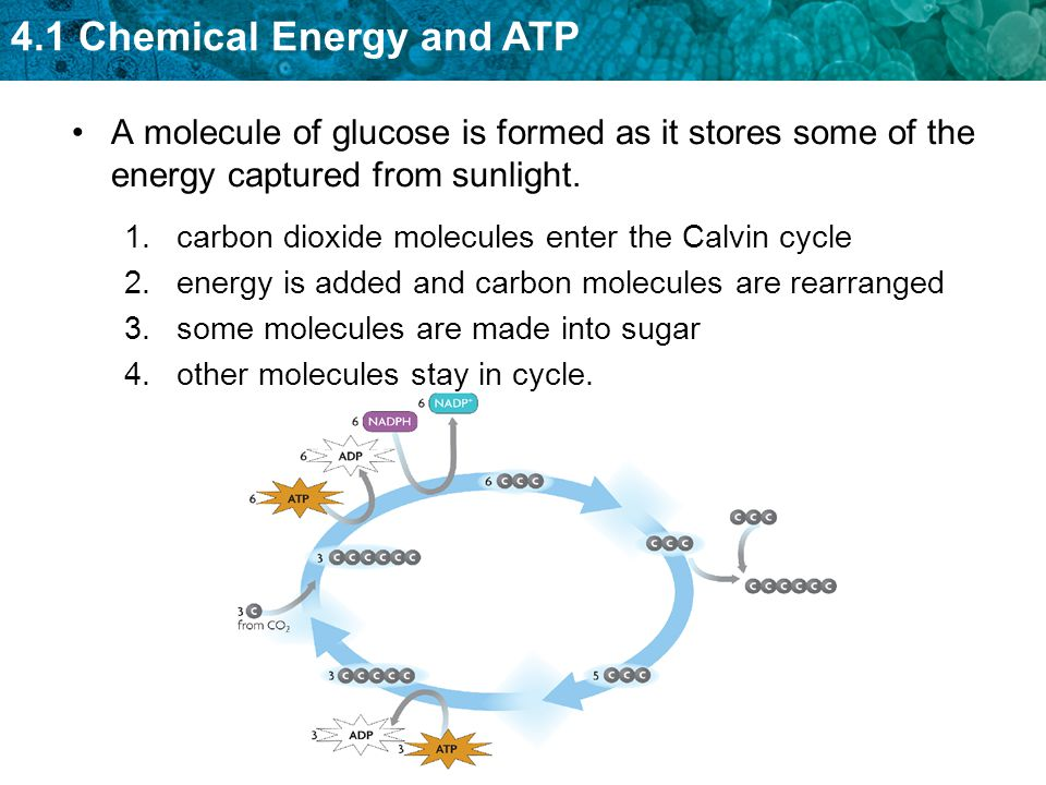 4.1 Chemical Energy and ATP A molecule of glucose is formed as it stores some of the energy captured from sunlight. 1.carbon dioxide molecules enter t