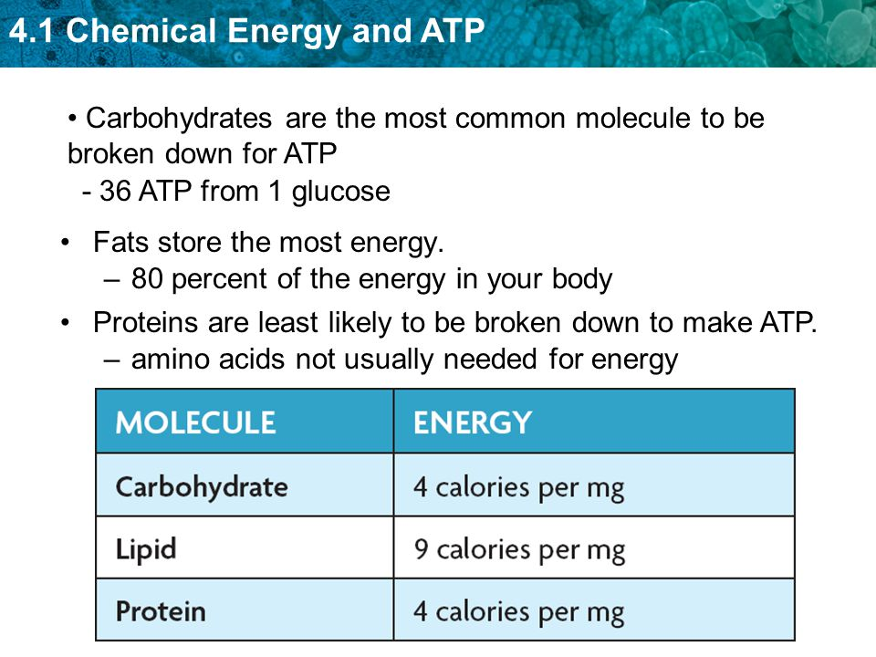 4.1 Chemical Energy and ATP Fats store the most energy. –80 percent of the energy in your body Proteins are least likely to be broken down to make ATP