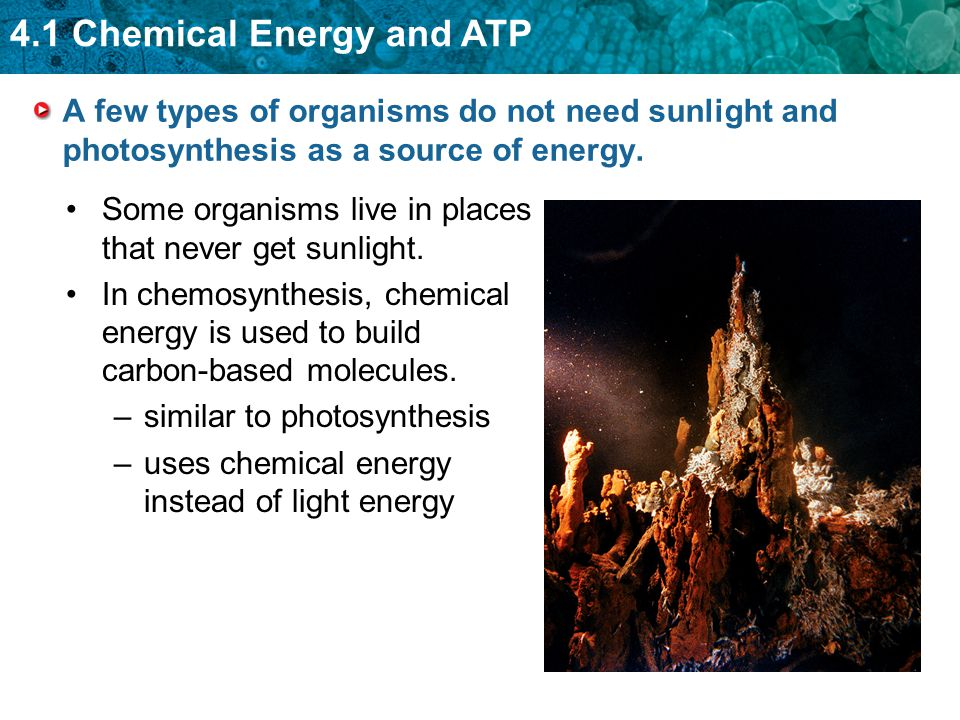 4.1 Chemical Energy and ATP A few types of organisms do not need sunlight and photosynthesis as a source of energy. Some organisms live in places that