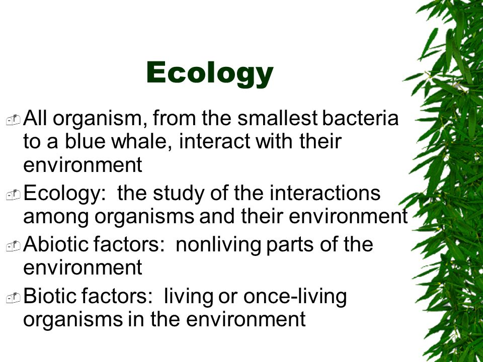 Soil provides a home for many species of animal.