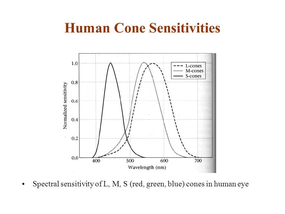 Human Cone Sensitivities Spectral sensitivity of L, M, S (red, green, blue) cones in human eye