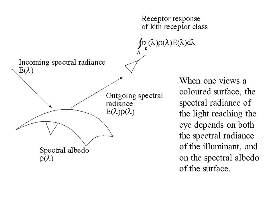 When one views a coloured surface, the spectral radiance of the light reaching the eye depends on both the spectral radiance of the illuminant, and on the spectral albedo of the surface.