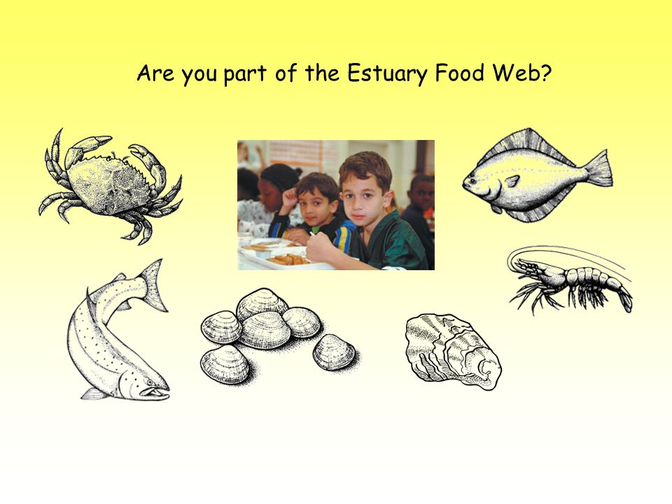 Are you part of the Estuary Food Web?