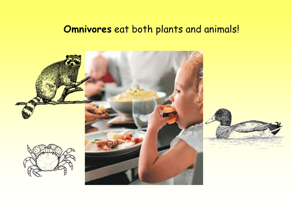 Omnivores eat both plants and animals!