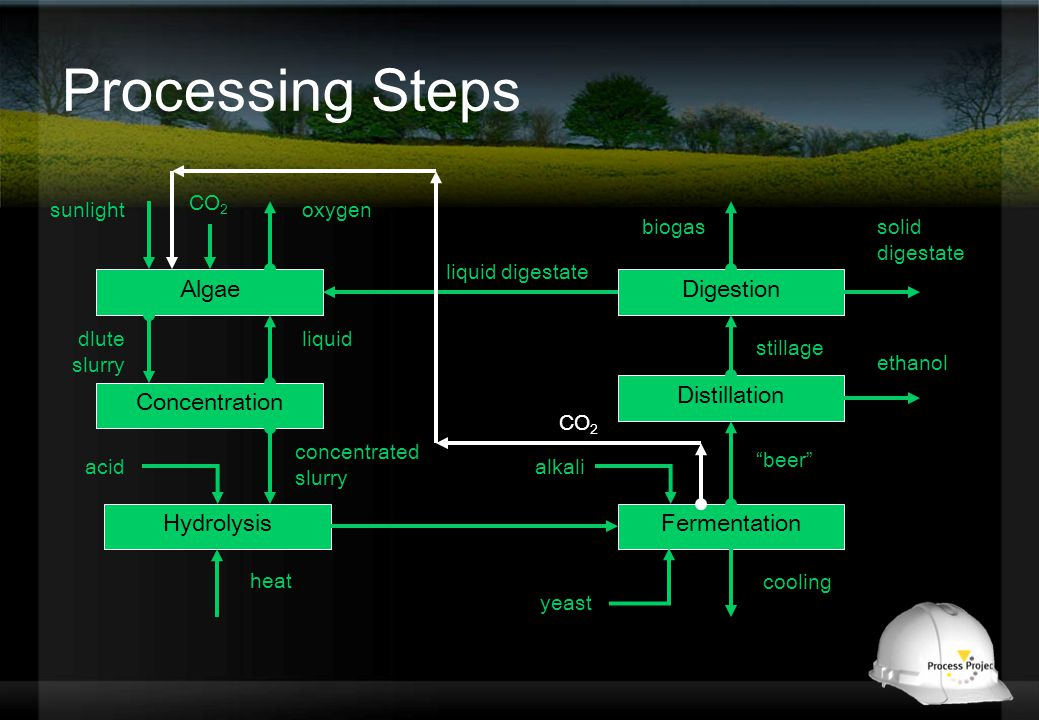 Processing Steps Algae Concentration liquid Hydrolysis concentrated slurry Fermentation alkali heat cooling Distillation beer Digestion stillage liquid digestate ethanol solid digestate dlute slurry acid oxygensunlight CO 2 biogas yeast