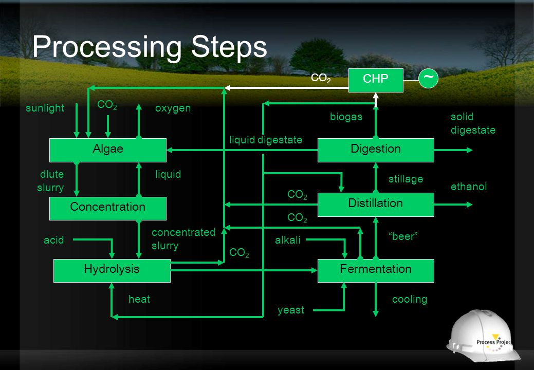 Processing Steps Algae Concentration liquid Hydrolysis concentrated slurry Fermentation alkali heatcooling Distillation beer Digestion stillage liquid digestate ethanol solid digestate biogas dlute slurry acid oxygensunlight CO 2 CHP CO 2 ~ yeast