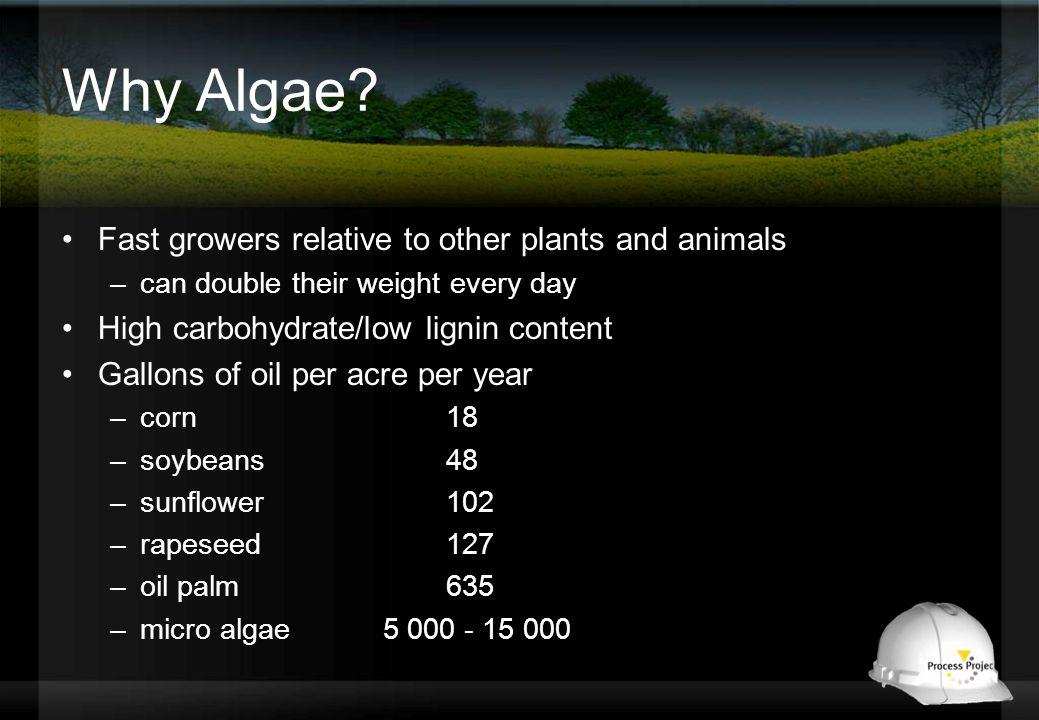 Why Algae.