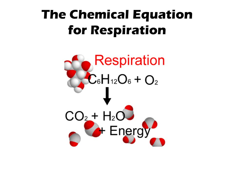 The Chemical Equation for Respiration