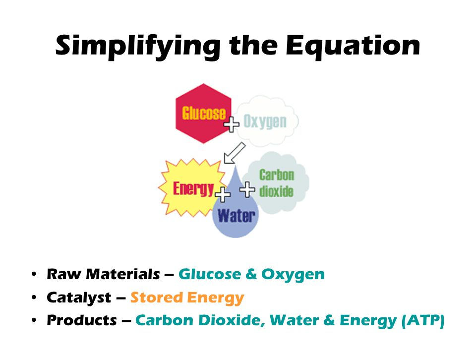 Simplifying the Equation Raw Materials – Glucose & Oxygen Catalyst – Stored Energy Products – Carbon Dioxide, Water & Energy (ATP)