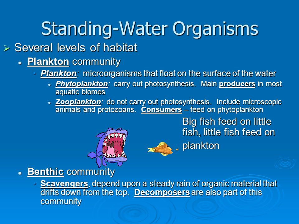 Standing-Water Organisms  Several levels of habitat Plankton community Plankton community Plankton: microorganisms that float on the surface of the w