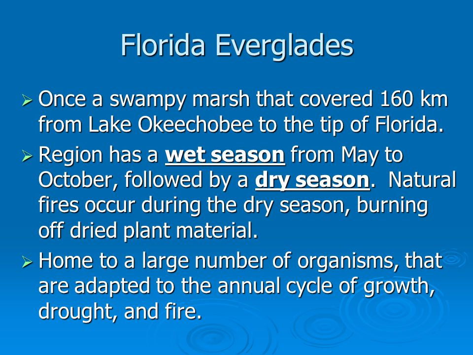 Florida Everglades  Once a swampy marsh that covered 160 km from Lake Okeechobee to the tip of Florida.  Region has a wet season from May to October