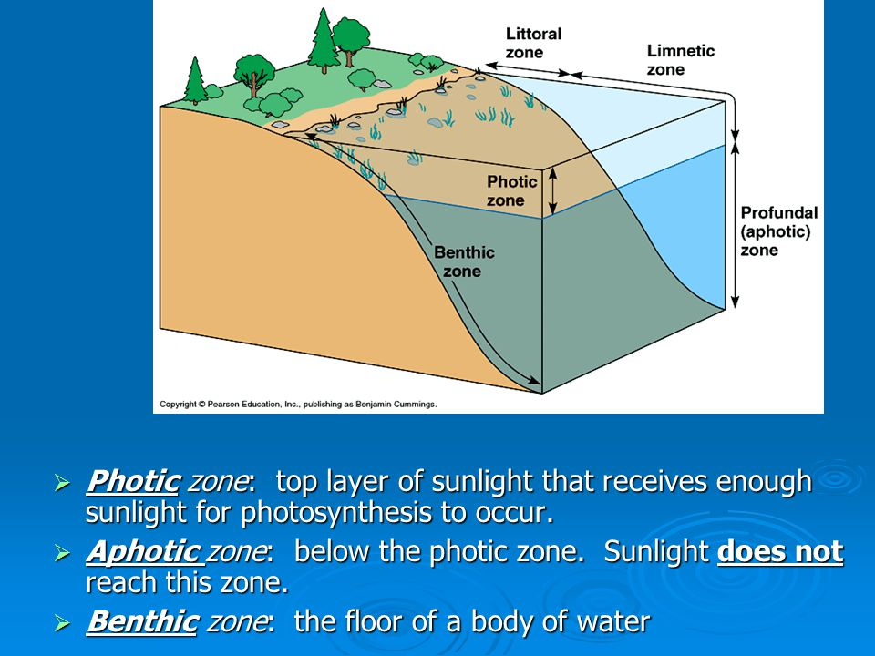 Question Break 1.What characteristic distinguishes the photic zone from the aphotic zone.