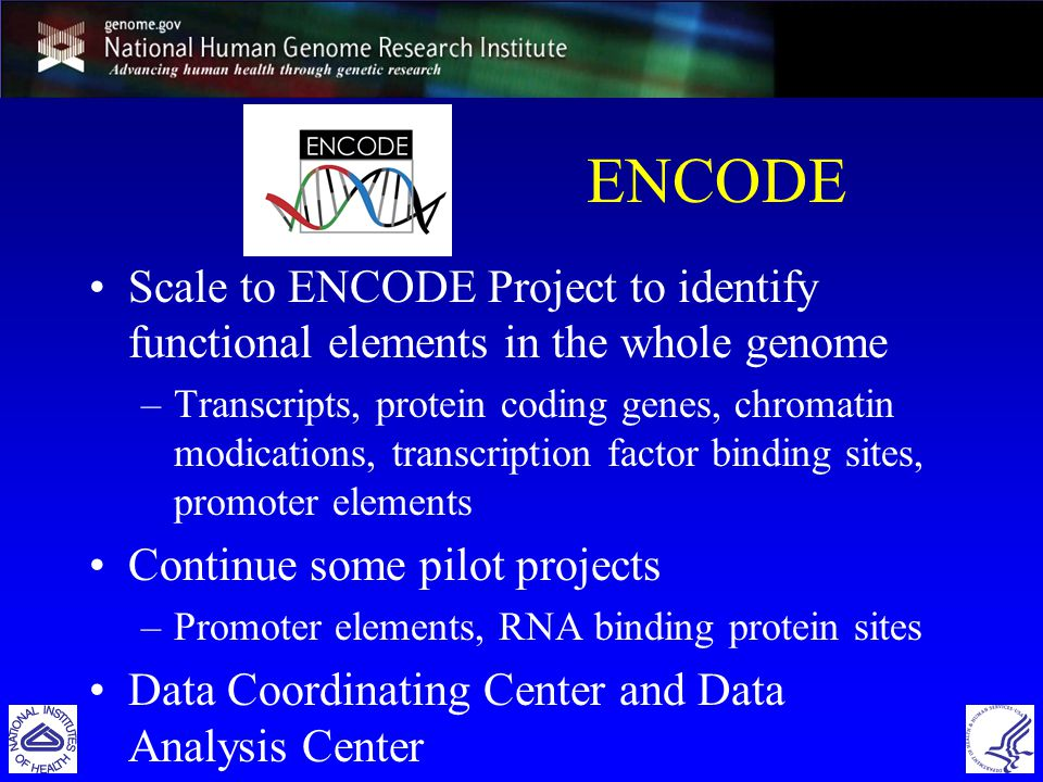 ENCODE Scale to ENCODE Project to identify functional elements in the whole genome –Transcripts, protein coding genes, chromatin modications, transcription factor binding sites, promoter elements Continue some pilot projects –Promoter elements, RNA binding protein sites Data Coordinating Center and Data Analysis Center