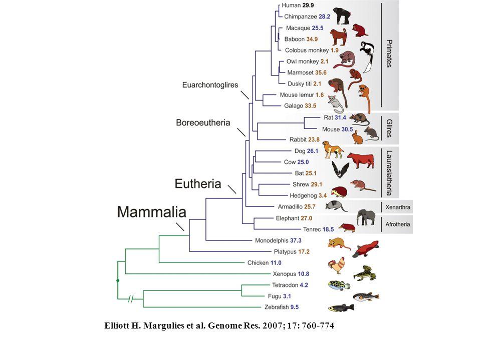 Elliott H. Margulies et al. Genome Res. 2007; 17: 760-774