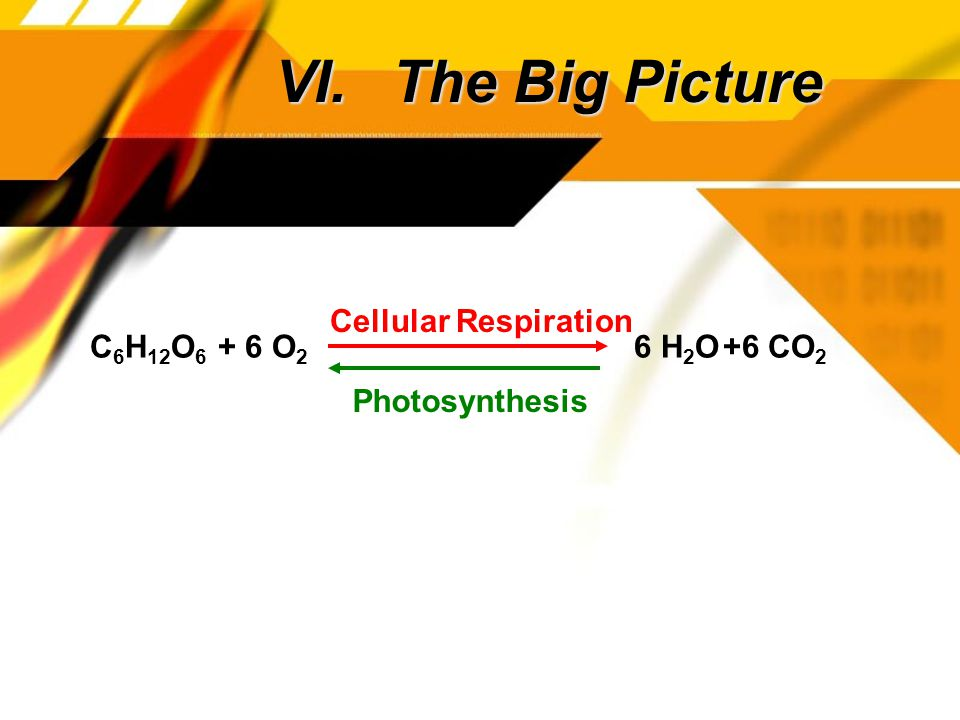 VI. The Big Picture C 6 H 12 O 6 + 6 O 2 +6 CO 2 6 H 2 O Cellular Respiration Photosynthesis