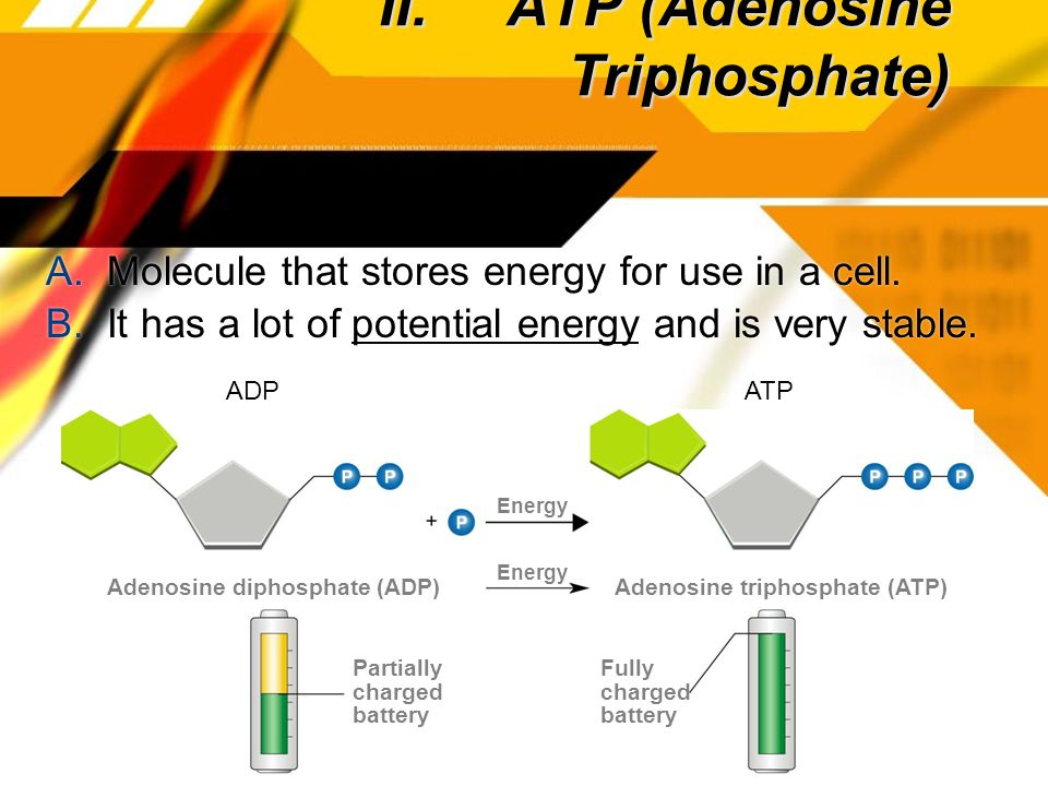 II. ATP (Adenosine Triphosphate) A. Molecule that stores energy for use in a cell.