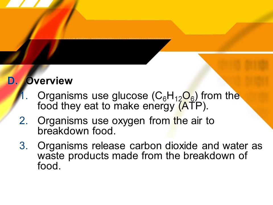 D. Overview 1.Organisms use glucose (C 6 H 12 O 6 ) from the food they eat to make energy (ATP). 2.Organisms use oxygen from the air to breakdown food