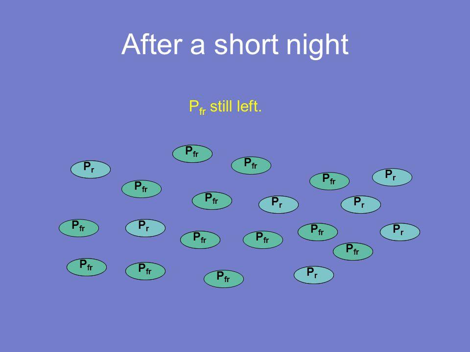 P fr After a short night P fr PrPr PrPr PrPr PrPr PrPr PrPr PrPr PrPr PrPr PrPr P fr still left.