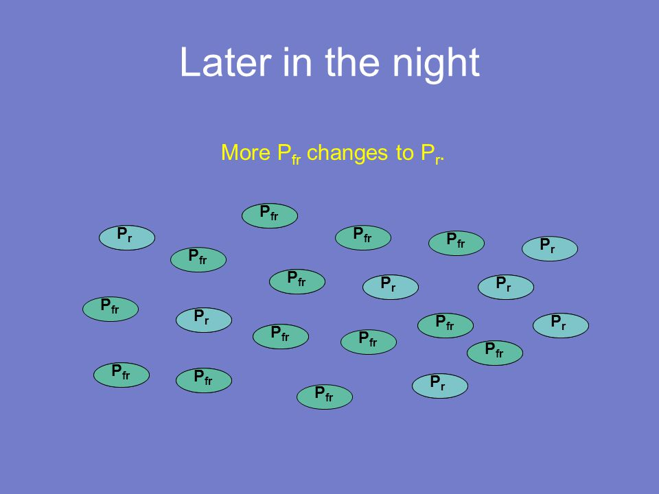 P fr Later in the night P fr PrPr PrPr PrPr PrPr PrPr PrPr PrPr PrPr PrPr PrPr More P fr changes to P r.
