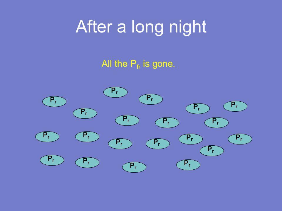 P fr After a long night P fr PrPr PrPr PrPr PrPr PrPr PrPr PrPr PrPr PrPr PrPr All the P fr is gone.